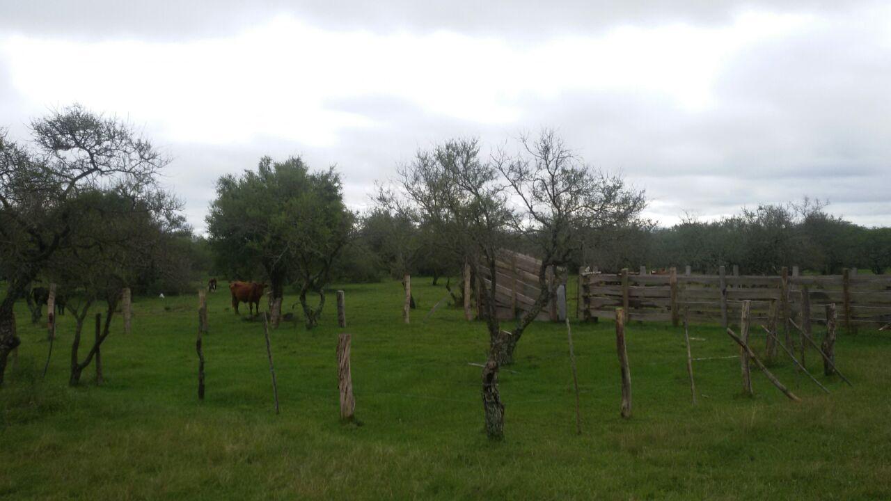 Vendo 45 has Ganaderas a 20 km de Chajari, Entre Ríos