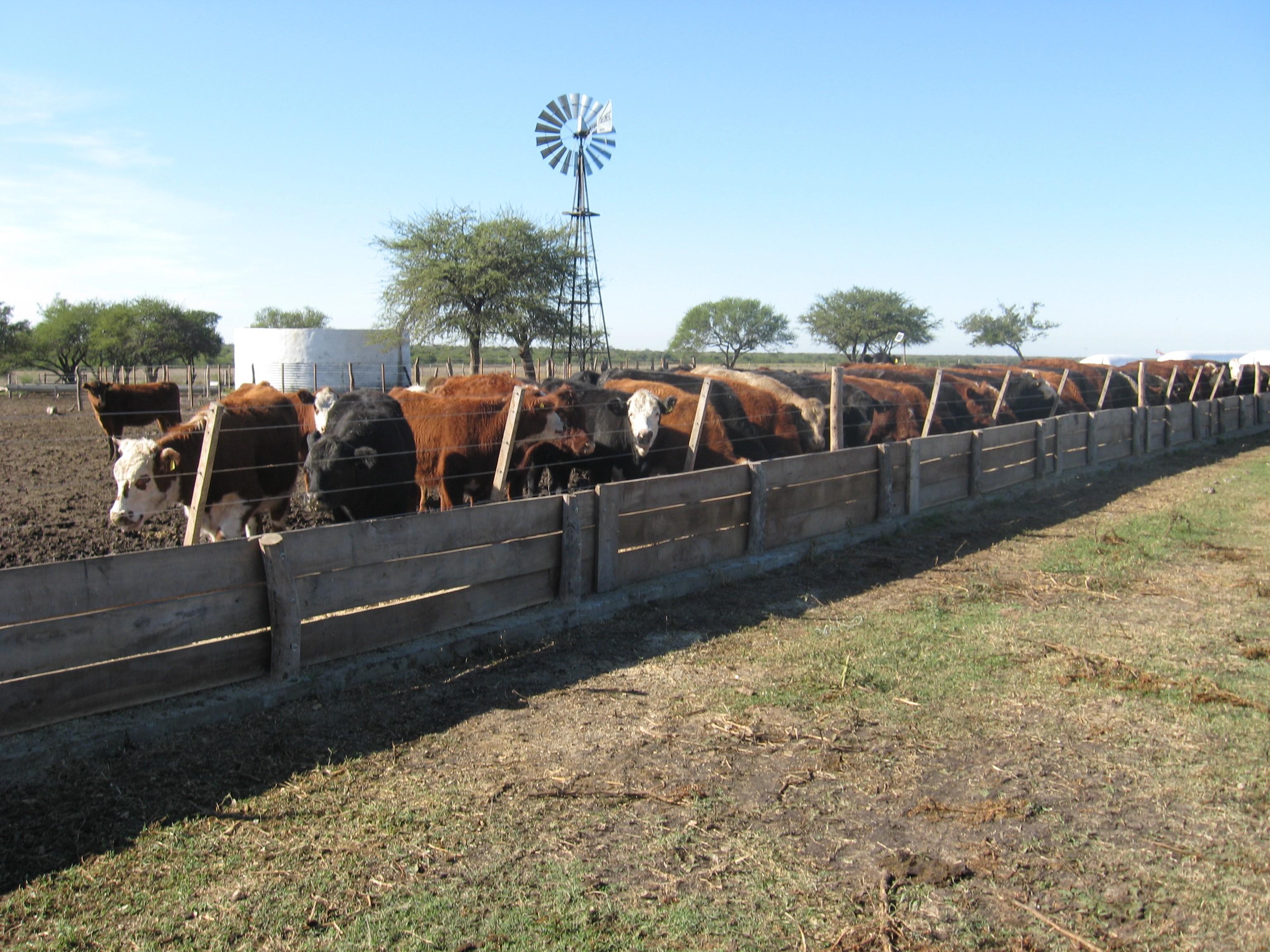 Gualeguay, 60 has agricolas con feedlot para 6000 vacunos